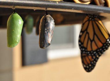transformatie en vertrouwen