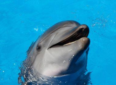 wat we van dolfijnen kunnen leren